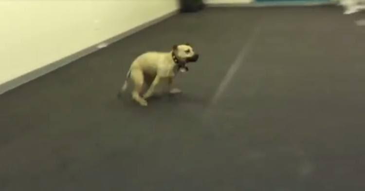 Σκύλος δοκιμάζει πίτσα για πρώτη φορά στη ζωή του. Προσέξτε τώρα την ΕΠΙΚΗ του αντίδρασή..! Σκύλος