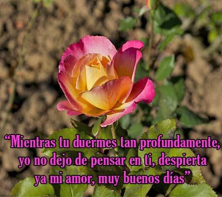 Imagenes De Rosas Con Frases De Buenos Dias Rosas De Amor