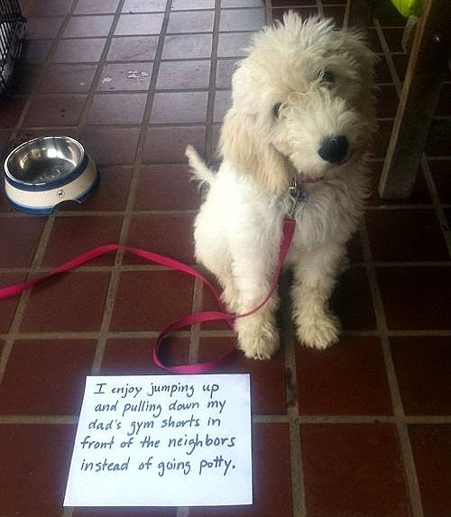6.17.16 - Dog Shaming - Father's Day Edition11