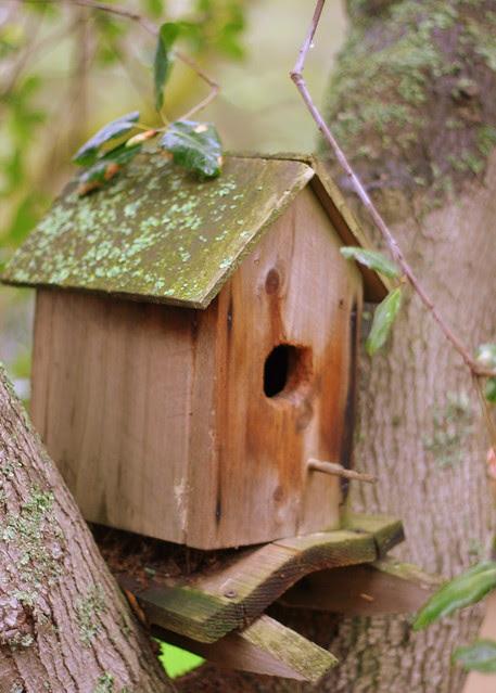 Birds Nesting Here