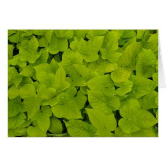 Blank Card with Sweet Potato Vines