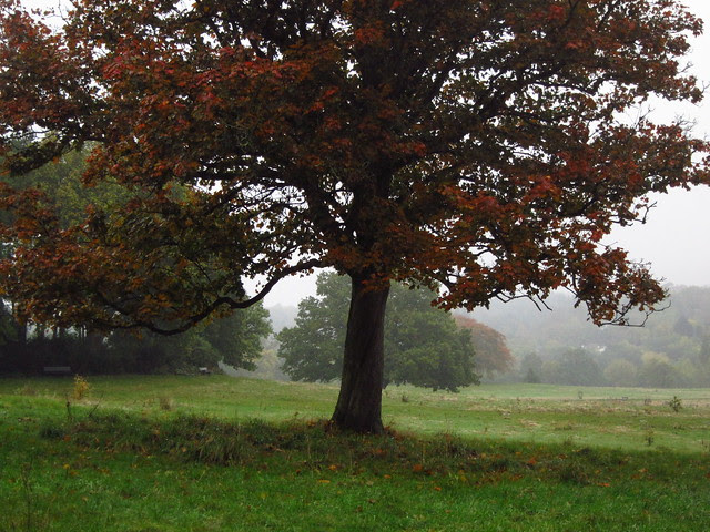 Trees at the Tumulus Field