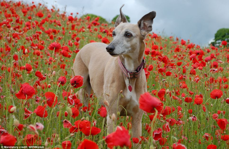 And they call it poppy love: Third place runner-up in the Dog Portrait category. Photo taken by Sarah Brown