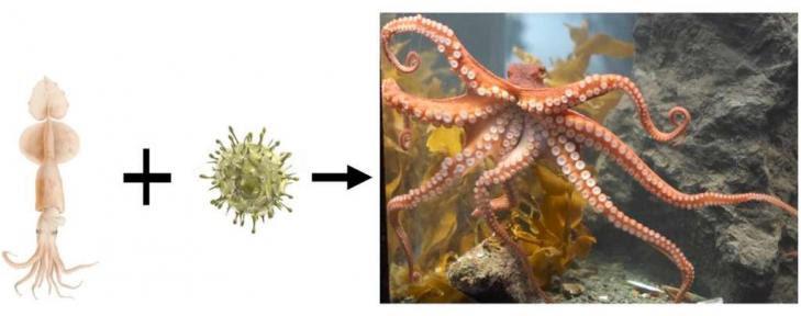 Calmar pieuvre virus