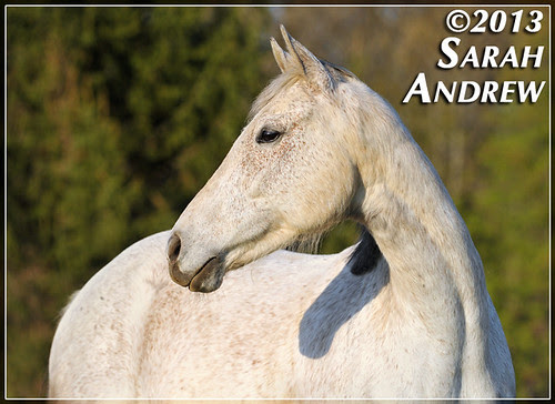 Chance- Wizard's new pasturemate and a 2011 Camelot graduate.
