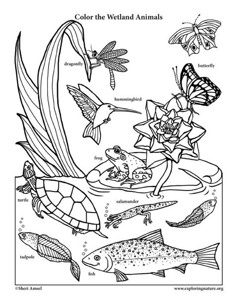 smiling wetland animals coloring page