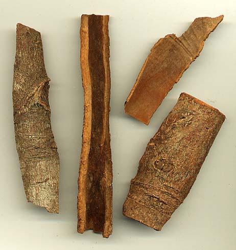 File:Cassia bark.jpg