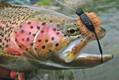 Mastering the Morrish Mouse   Fly Fisherman