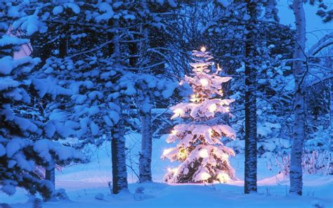 christmas tree desktop background  images