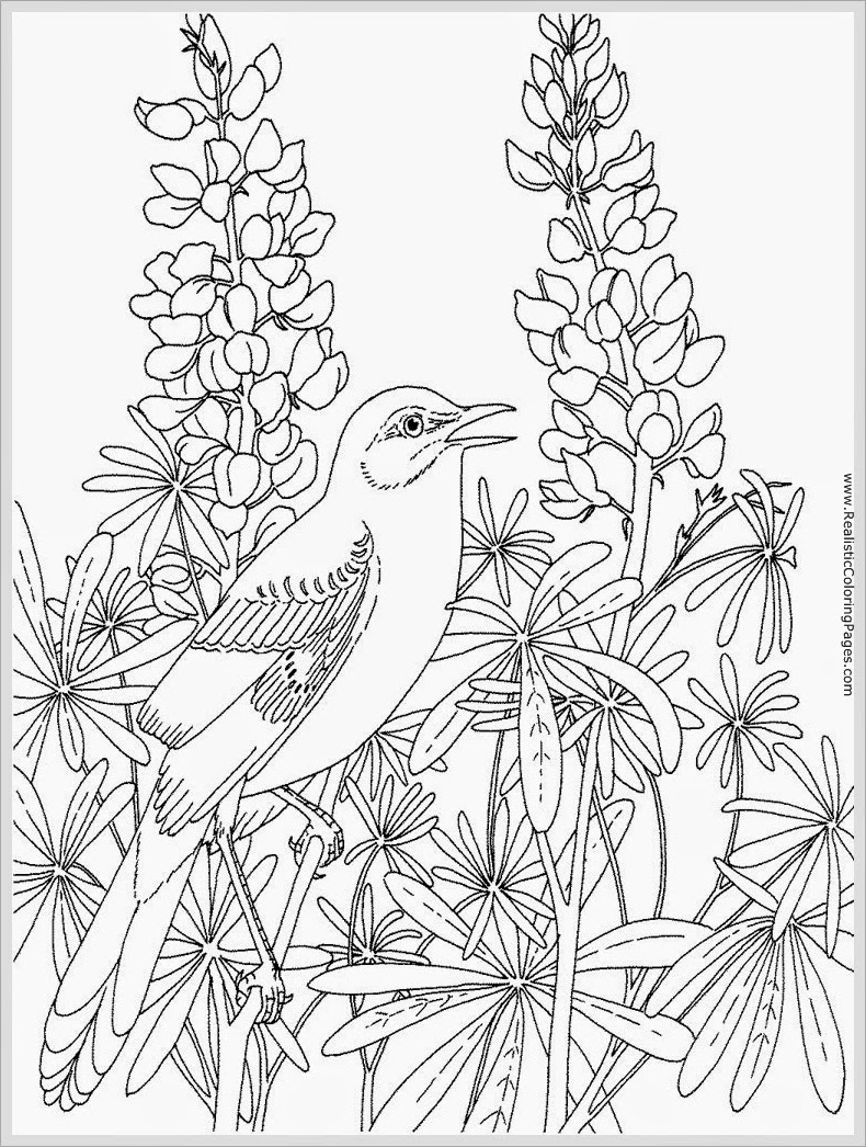 Pictures Of Birds For Coloring