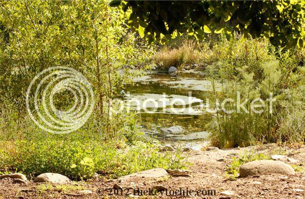 trees, stream, park