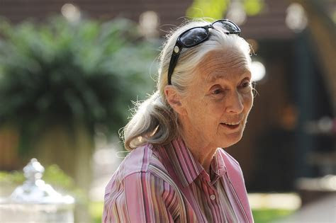 Jane Goodall Private Event   Calluna EventsCalluna Events