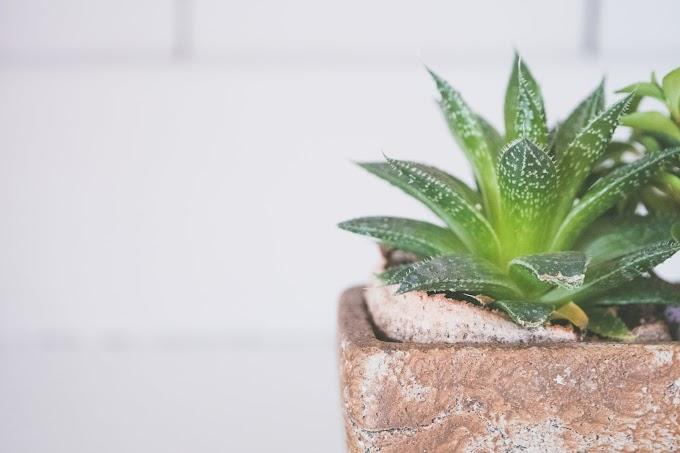 Χυμός Aloe vera: 5 +1 οφέλη | InMedHealth