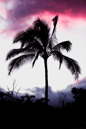 palm-tree-at-sunset.gif