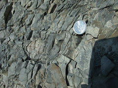 fossils with dime