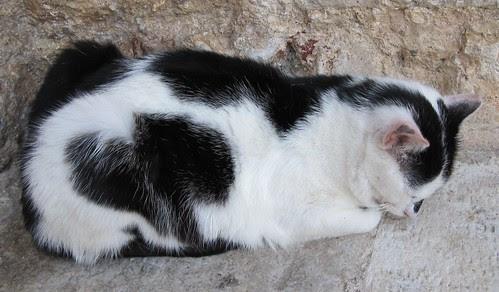 cat 2010 251