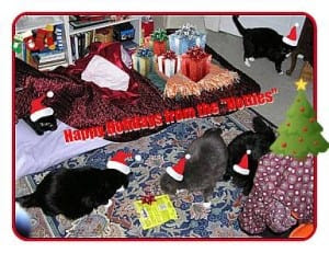 House of the Mostly Black Cats 5