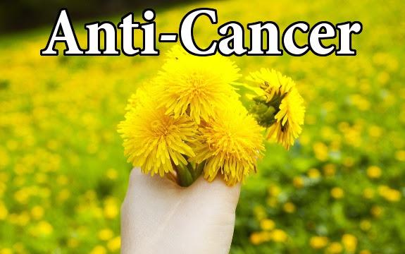 """Résultat de recherche d'images pour """"Cancer drug, Dandelion:"""""""