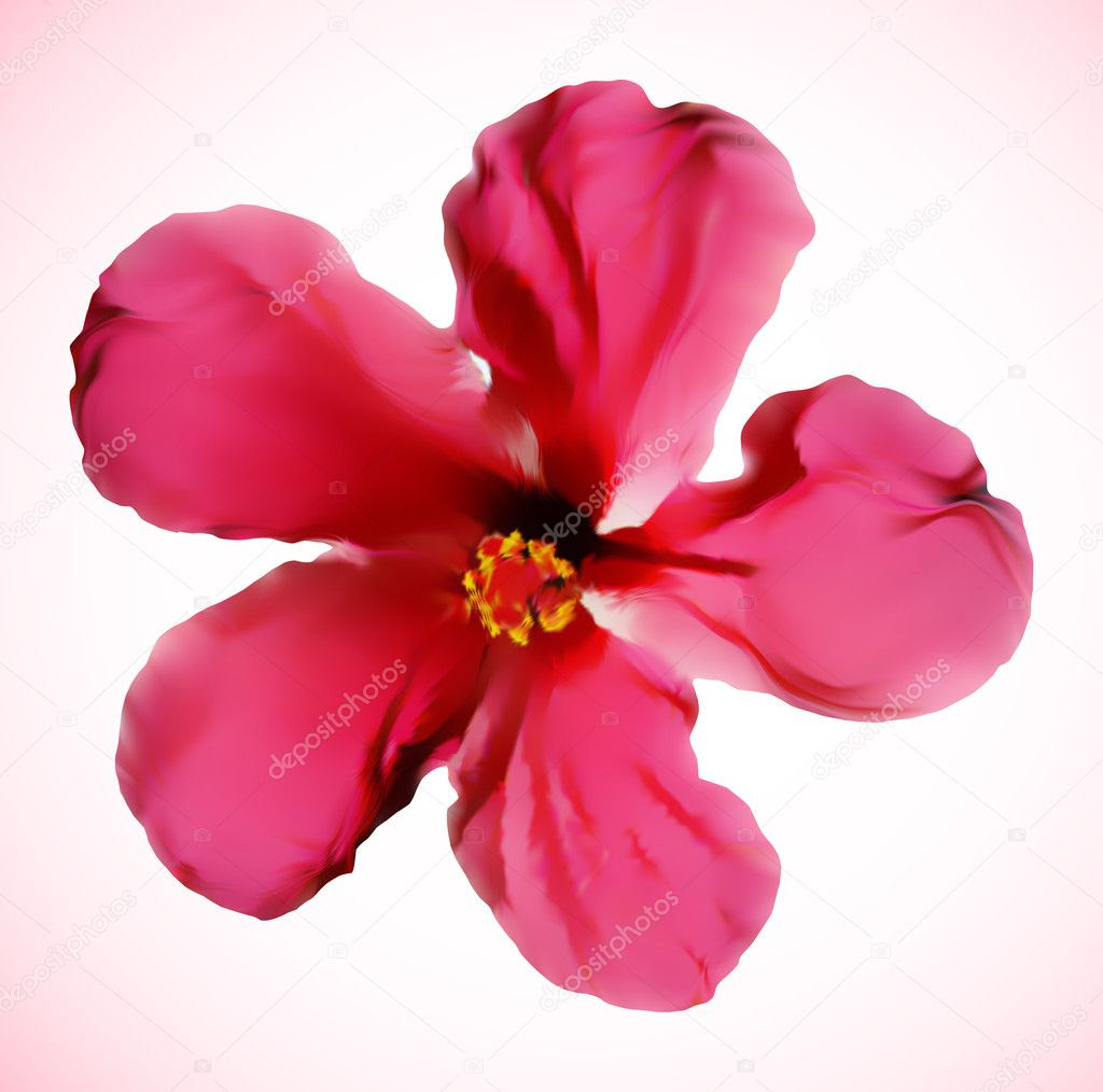 Click Here for hibiscus flower