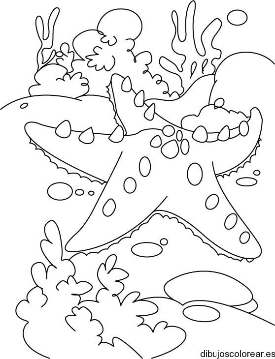 Dibujo De Una Estrella De Mar Y Algas
