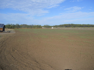 2014 Wheat About 10 Days After Planting