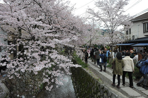 Japan trip - Sakura in Kyoto 2012.