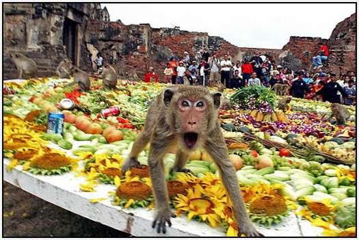 Monkey-Buffet-Festival-Bangkok-Thailand