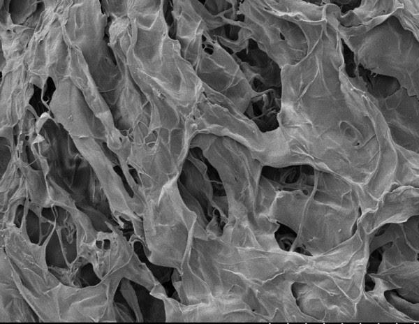 Las células madre y la producción de organoides están en el primer plano del interés biomédico