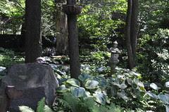boulder in hosta garden DSC_6238