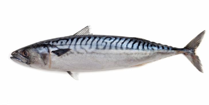 Denizlerimizde Avlanan Balık Türleri Alaçatı Big Fish