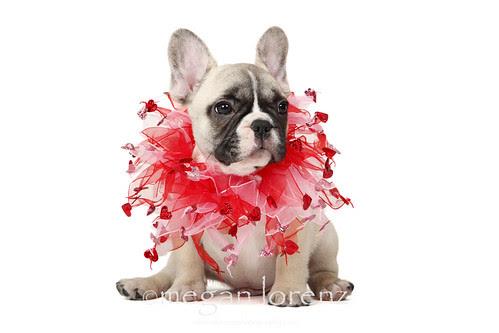 Valentine's Day by Megan Lorenz