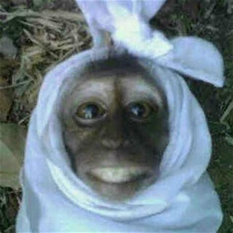 gambar lucu pocong monyet
