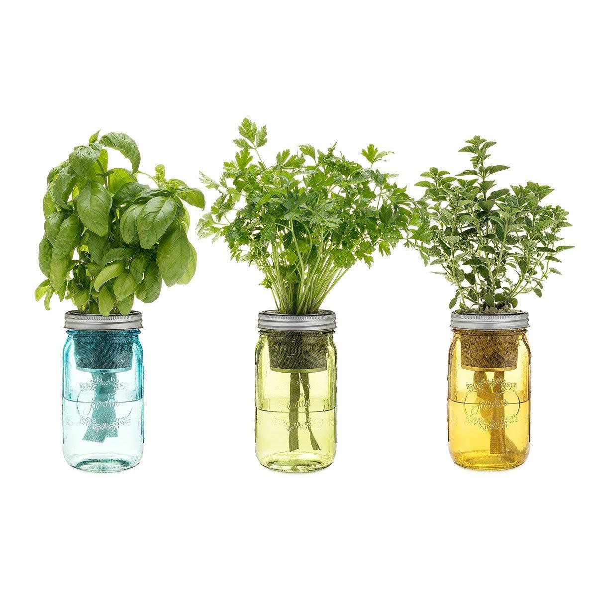 self watering mason jar indoor herb garden 3