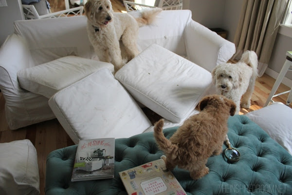 Jack Lily and Bella and white slipcovered sofa troubles - The Inspired Room