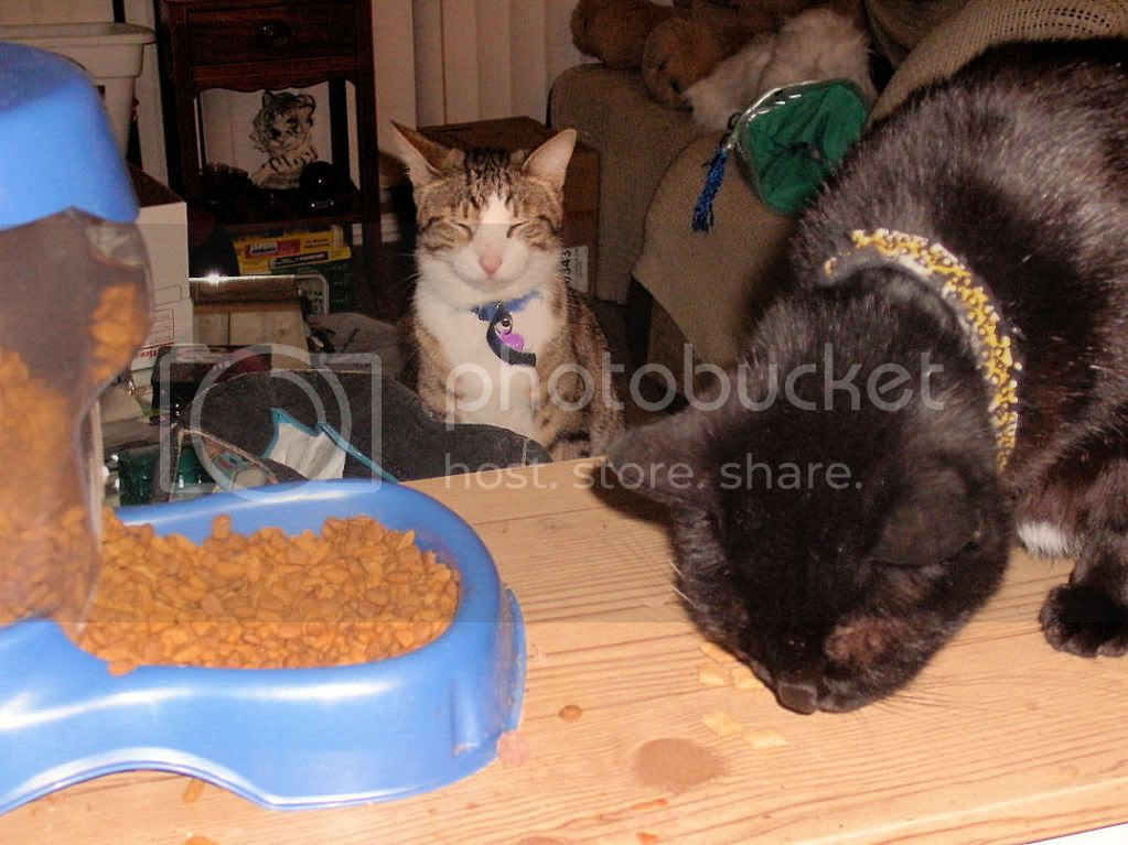 No food for Tabby brofur!