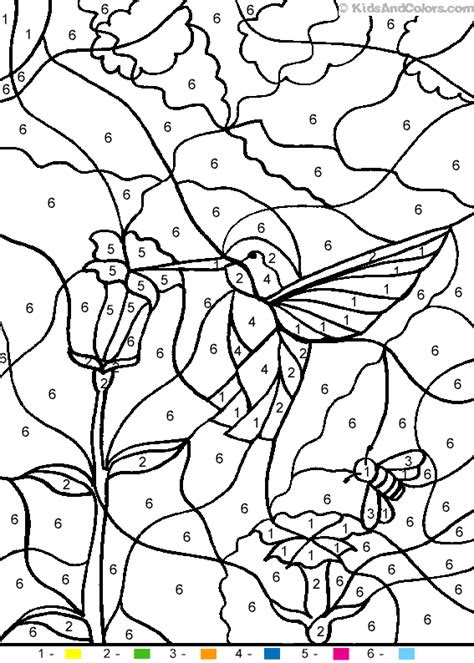 hummingbird colouring pages sketch coloring page