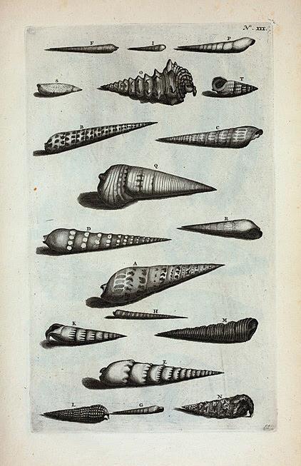 Strombi: A. Strombus primus, sive subula; B. Strobus secundus;  C. Strombus tertius; D. Strombus quartus; E. Strombus Dentatus; F. Strombus septimus; G. Strombus octavus, sive lanceatus; H. Strombus nonus, sive granulatus;I. Strombus chalybeus; K. Strombus caudatus albus;  L. Strombus caudatus granulatus M. Strombus Tympanorum, seu Tympanotonos; N. Strombus tuberosus; O. Strombus angulosus; P. Strombus fluviatilis; Q. Strombus palustris; R. Strombus palustris lævis; S. Terebellum; T. Strombus Naalde.