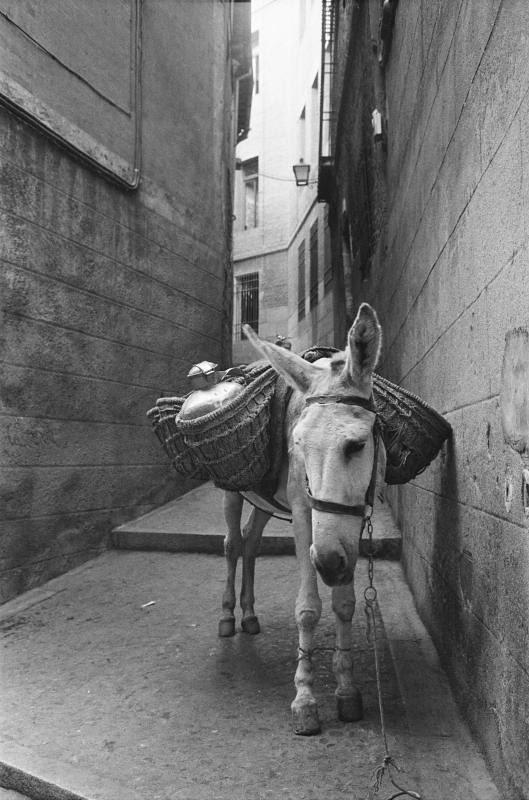 Burro en una calle de Toledo en septiembre de 1962. Fotografía de Harry Weber. Österreichische Nationalbibliothek