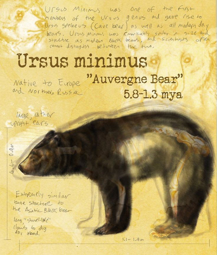 Ursus Minimus by Shockshockshad