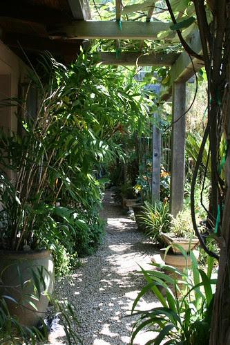 plant lovers paradise