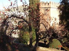 Sepohon Pokok Peach Kat Dalam Palacio Nazaries di Alhambra, Granada, Spain