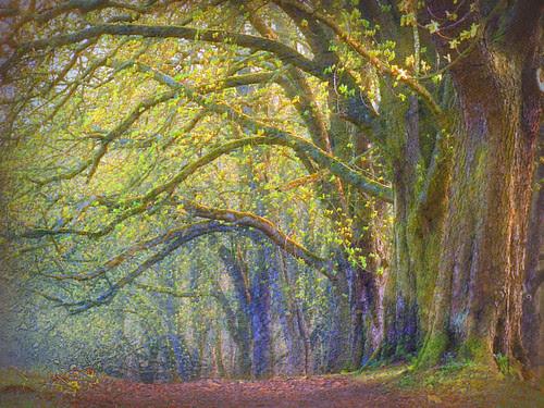 old trees in the morning light por Blue eYes Art
