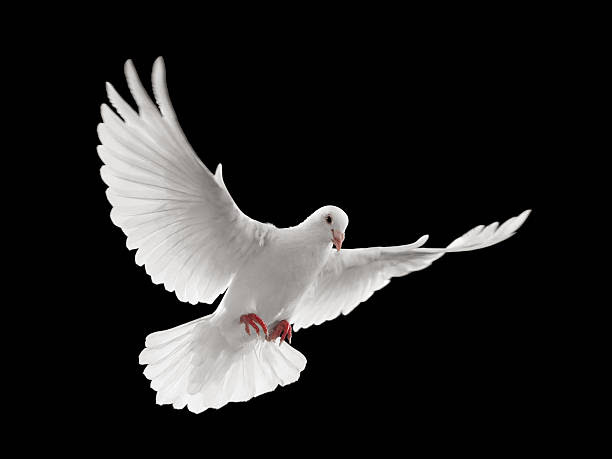 You Are My Dove My Perfect One Call 2 Come