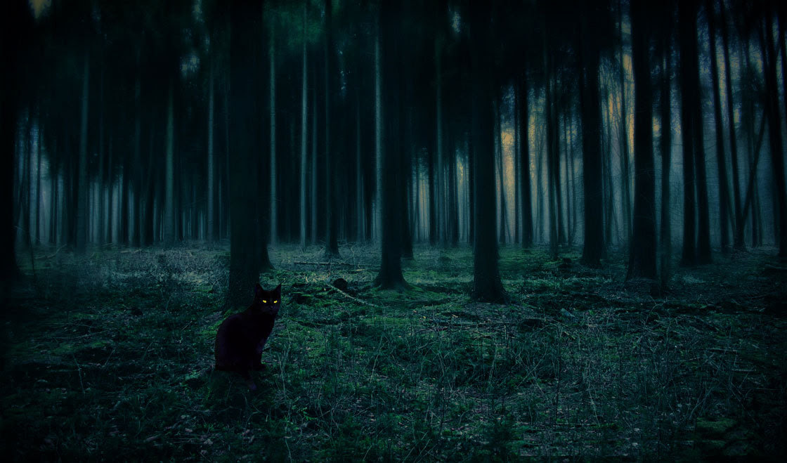 http://hauntedbythelight.tumblr.com/post/49307383703/bluepueblo-black-cat-forest-sweden-photo-via