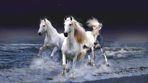 81+ Running Horse Wallpaper