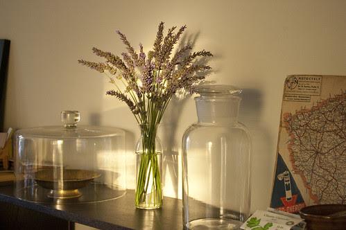 lavender, afternoon light