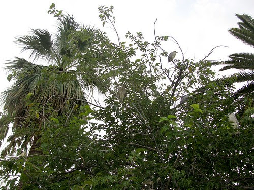 tree2584s