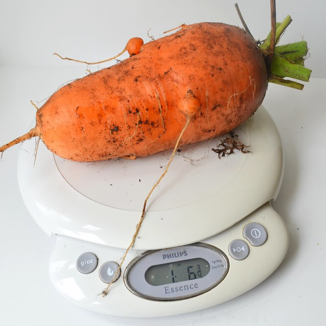 Weighty Carrot