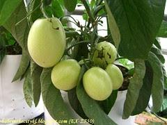 ch - cv cameron apple
