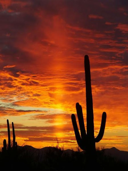 http://upload.wikimedia.org/wikipedia/commons/thumb/a/a1/Sunset_in_Saguaro_National_Park.JPG/450px-Sunset_in_Saguaro_National_Park.JPG